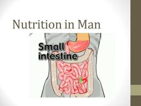 Nutrition in Man. Let's Recap! What are the 3 parts of the small intestine? What are the 3 secretions found in the duodenum? Are you able to recall what.