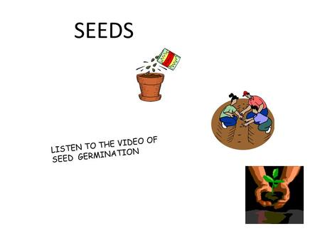 SEEDS LISTEN TO THE VIDEO OF SEED GERMINATION We get different kinds of seeds from plants cucumber (vegetable) flower Watermelon (fruit) other nuts pine.