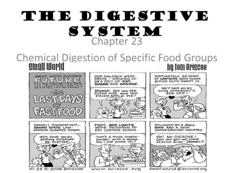 The Digestive System Chapter 23 Chemical Digestion of Specific Food Groups.