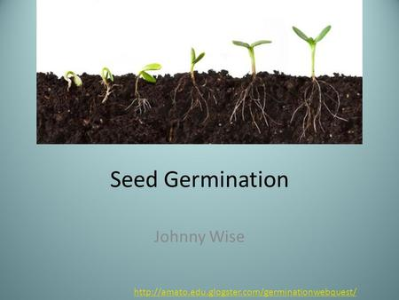 Seed Germination Johnny Wise