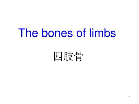 The bones of limbs 四肢骨.