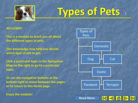 Types of Pets Domestic Dog Cat Exotic Parakeet Terrapin 1 WELCOME!