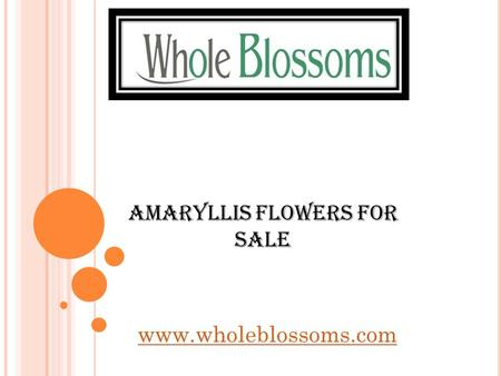 Amaryllis Flowers For Sale