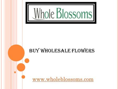 Buy Wholesale Flowers   can be the best place for you to visit when looking to buy wholesale flowers in.