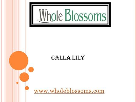 Calla Lily  Want to grab the fresh Calla Lily Flowers at the best prices? Stop running around in the market and visit