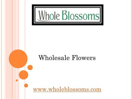 Wholesale Flowers  From lilies to gerberas and more, there is a wide range of wholesale flowers that you can get at Whole Blossoms.