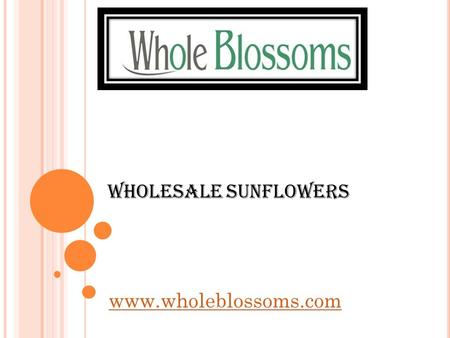 Wholesale Sunflowers  If you are on the lookout for a place to get wholesale sunflowers, going to  can.