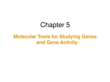 Molecular Tools for Studying Genes and Gene Activity