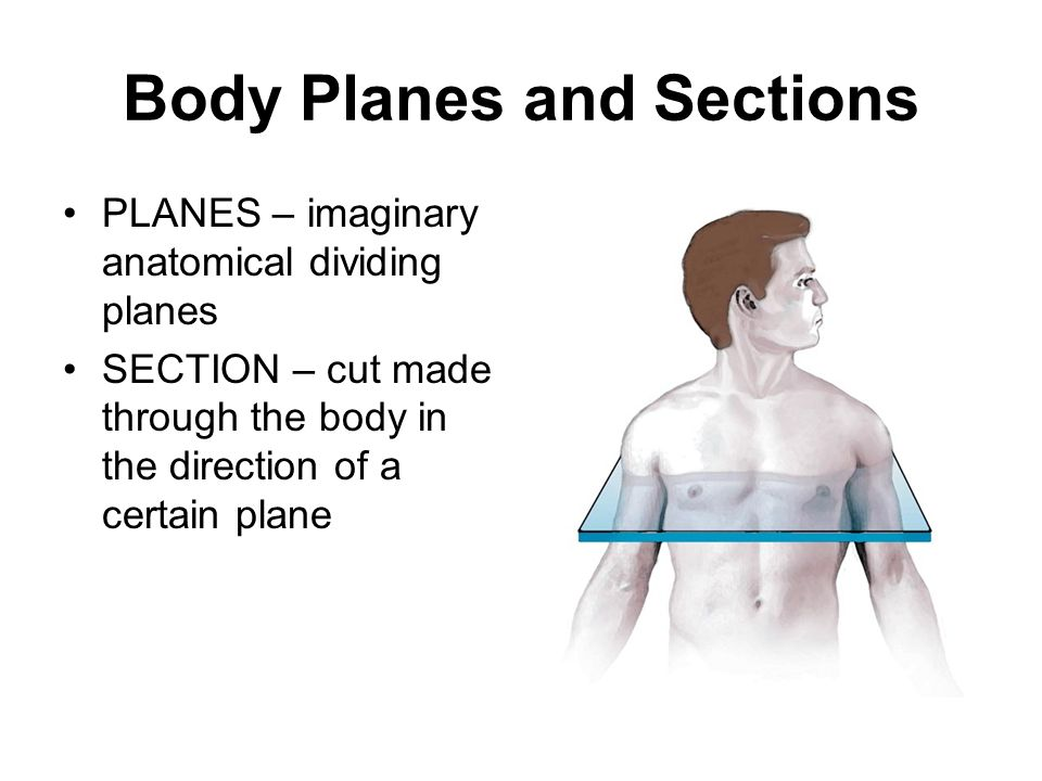 Body Planes and Sections SAGITTAL PLANE – divides the body into right and left parts