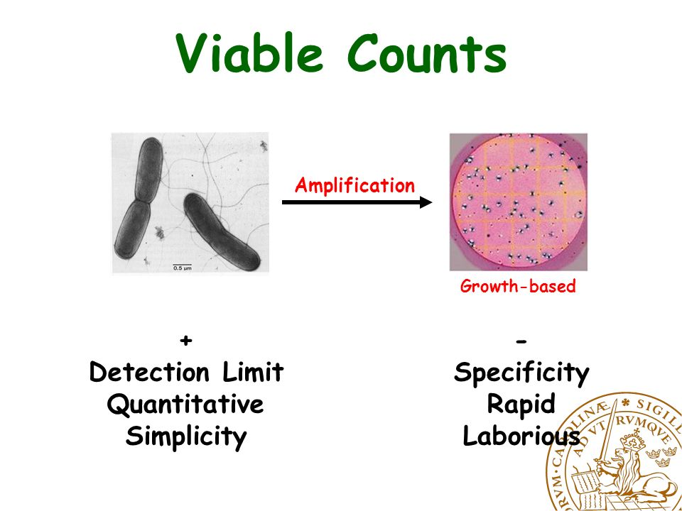 Rapid Methods 1.Cell counting methods Flow cytometry Direct epifluorescent microscopy 2.