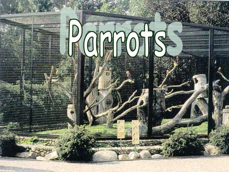 About parrots… p arrots are very popular animals most of them live in Australia, South America, New Zealand, … on the world is many kinds of this animal.
