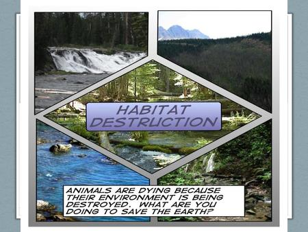 Agenda Introduction Effects – How Does Habitat Loss Affect Mother Nature? Causes – Contributing Factors To Habitat Loss Definition : Process & Example.