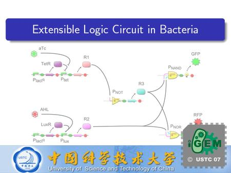 USTC iGEM 2007 Extensible Logic Circuit in Bacteria Aims How to implement elementary computations? How to form a more complex one?
