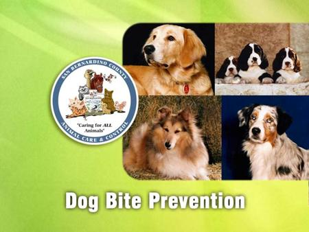Any dog can bite, even a dog you know. Physical Trauma –Painful –Stressful –Disfiguring –Expensive –Fatal (rare)