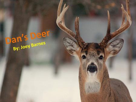 Dans Deer By: Joey Barnes. Dan has always hunted deer. Dan wants to get a deer this year.