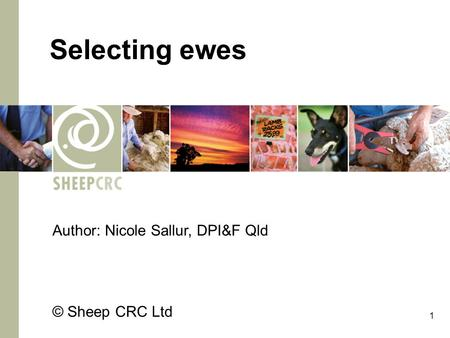 1 Selecting ewes Author: Nicole Sallur, DPI&F Qld © Sheep CRC Ltd.