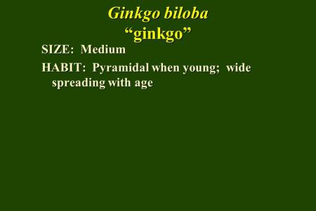 Ginkgo biloba ginkgo SIZE: Medium HABIT: Pyramidal when young; wide spreading with age.
