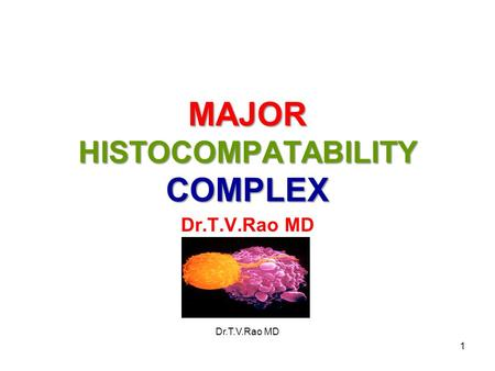 MAJOR HISTOCOMPATABILITY COMPLEX Dr.T.V.Rao MD 1.