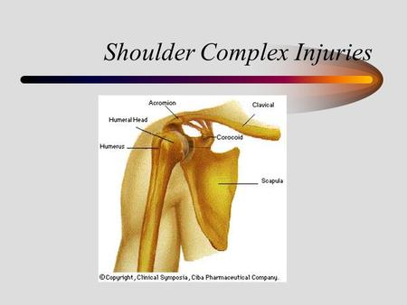 Shoulder Complex Injuries. Anatomy of the Shoulder Ball and Socket Joint –Shallow, which leads to instability –Relies on muscular strength for stability.