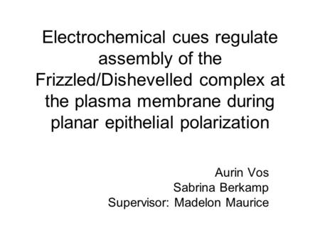 Electrochemical cues regulate assembly of the Frizzled/Dishevelled complex at the plasma membrane during planar epithelial polarization Aurin Vos Sabrina.
