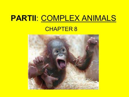 PARTII: COMPLEX ANIMALS CHAPTER 8. INVERTEBRATES 1.Phylum: Sponges 2.Phylum: Stinging cell 3.Phylum: Flatworm 4.Phylum: Roundworm 5.Phylum: Segmented.