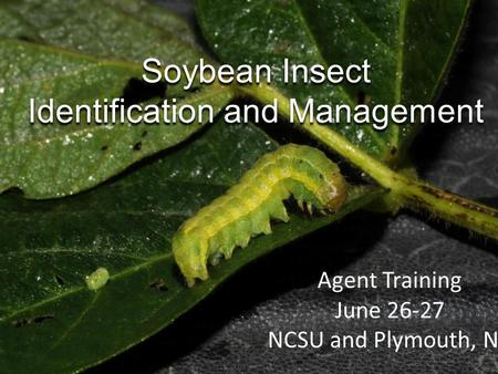 Soybean Insect Identification and Management Agent Training June 26-27 NCSU and Plymouth, NC.