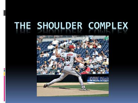 The shoulder complex.