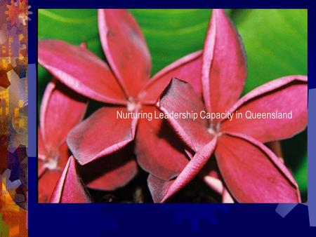 Nurturing Leadership Capacity in Queensland. Chaos, complexity and pedagogy SEEKING SEEKING NEW NEW BEACHES BEACHES.