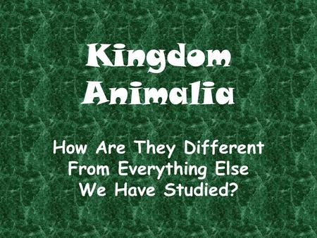 Kingdom Animalia How Are They Different From Everything Else We Have Studied?