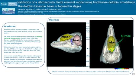Materials and methods Vibroacoustic finite element model (FEM) + CT scans of a post-mortem and a live dolphins head (Krysl et al., 2008) Make the pair.
