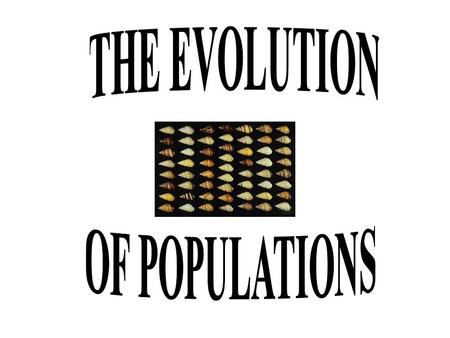 THE EVOLUTION OF POPULATIONS.