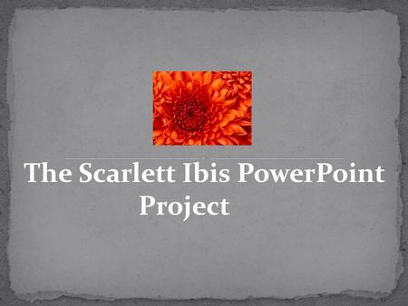 The Scarlett Ibis PowerPoint Project. 1.Title Slide-2 2.Mood Slide-3 3.Tone Slide-3 4.Plot Slide-3 5.Main Idea Slide-3 6.Compare/Contrast Slide- (Brothers)-3.