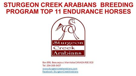 STURGEON CREEK ARABIANS BREEDING PROGRAM TOP 11 ENDURANCE HORSES Box 898, Beausejour, Manitoba CANADA R0E 0C0 Tel: 204-268-3437 www.sturgeoncreekarabians.com.
