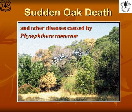 Sudden Oak Death and other diseases caused by Phytophthora ramorum.
