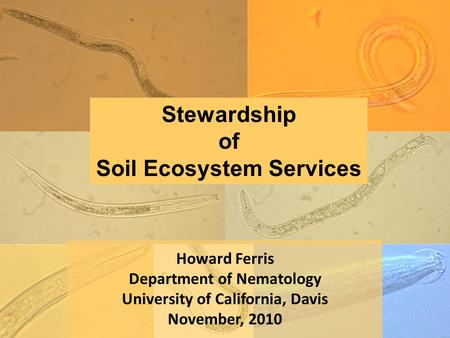 Howard Ferris Department of Nematology University of California, Davis November, 2010 Stewardship of Soil Ecosystem Services.