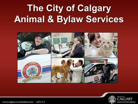 The City of Calgary Animal & Bylaw Services