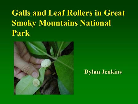 Galls and Leaf Rollers in Great Smoky Mountains National Park Dylan Jenkins.