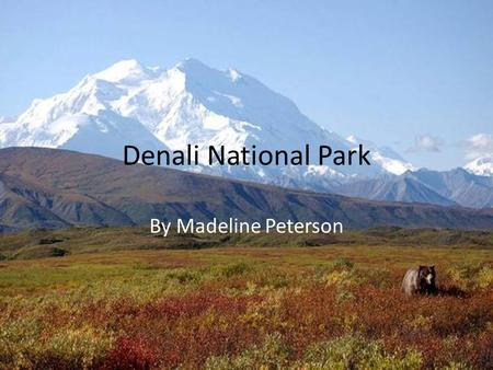 Denali National Park By Madeline Peterson.