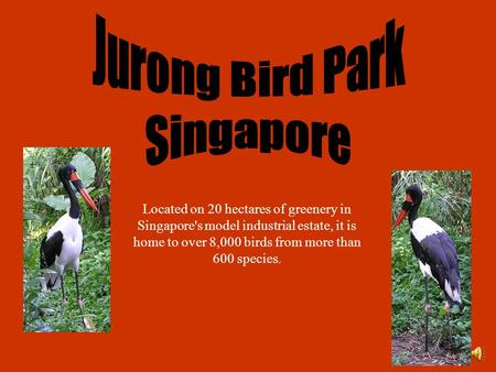 Located on 20 hectares of greenery in Singapore's model industrial estate, it is home to over 8,000 birds from more than 600 species.