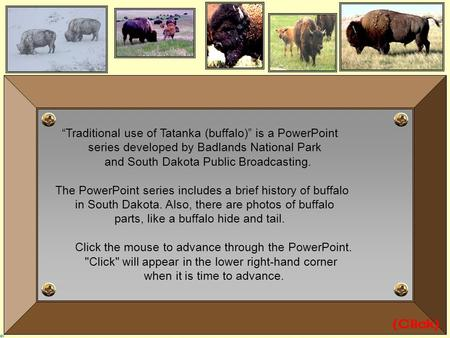 "(Click) ""Traditional use of Tatanka (buffalo)"" is a PowerPoint"