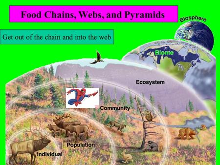Lesson 5 Intro to Ecology Get out of the chain and into the web Food Chains, Webs, and Pyramids.