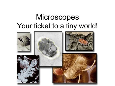 Microscopes Your ticket to a tiny world!. History of Microscopes –Robert Hooke wasnt the first to make a microscope, but he was one of the firsts to use.