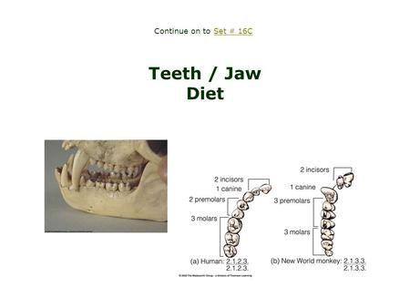 Teeth / Jaw Diet Continue on to Set # 16CSet # 16C.
