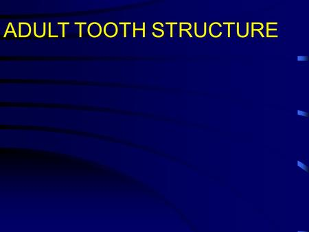 ADULT TOOTH STRUCTURE.