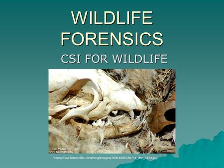 WILDLIFE FORENSICS CSI FOR WILDLIFE