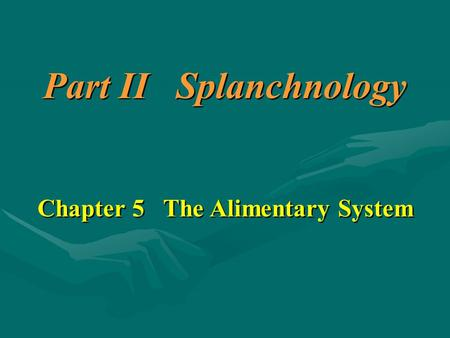 Chapter 5 The Alimentary System