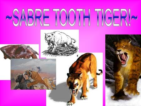 Sabre-toothed tigers are some of the best known and most popular of all Ice Age animals. They are among the most impressive carnivores ever to have lived.
