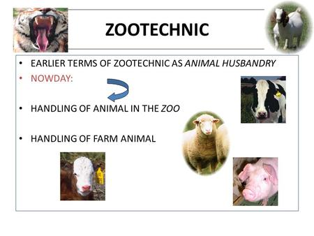 ZOOTECHNIC EARLIER TERMS OF ZOOTECHNIC AS ANIMAL HUSBANDRY NOWDAY: HANDLING OF ANIMAL IN THE ZOO. HANDLING OF FARM ANIMAL.
