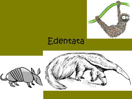 Edentata Notes only!!!.