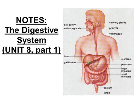 NOTES: The Digestive System (UNIT 8, part 1)